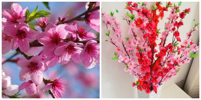 cvetok-persika